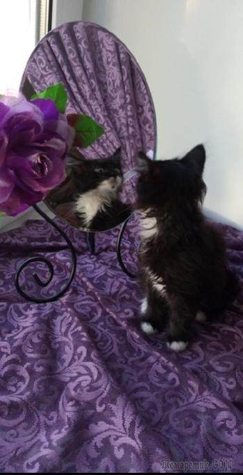 Кошка с брошкой (Стих)