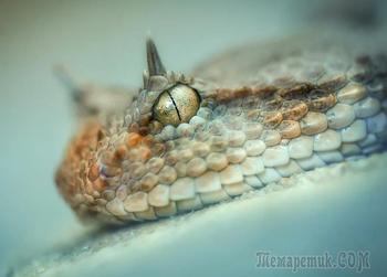 Самые необычные змеи планеты