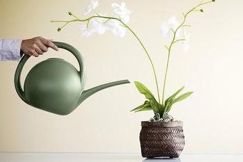 Вянут и сохнут листья у орхидеи: что делать и как помочь растению
