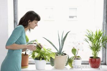 Пересадка комнатных растений: легко и просто