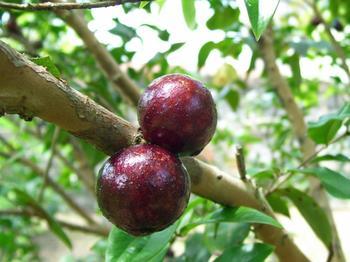 11 фруктов, которые не распространены в России, но вы должны их попробовать