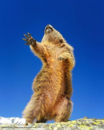 Забавные фото дикой природы, которые сделают ваш день