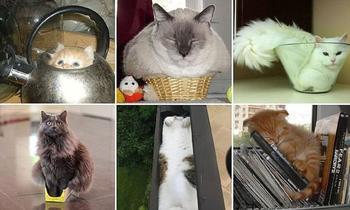 Коты, которые способны влезть куда угодно