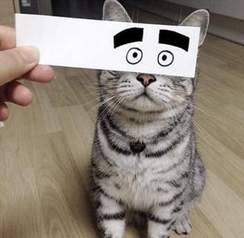 Такими кошек вы ещё не видели
