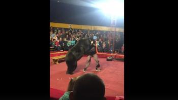 Случай в Цирке в Карелии или Хотите ли вы рисковать жизнью Своих Детей ради сомнительного развлечения?