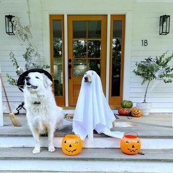 Домашние животные в креативных хэллоуинских костюмах