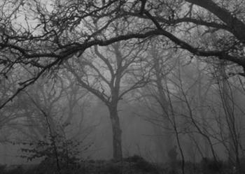 Леса в Великобритании, куда вы ни за что не пойдете ночью