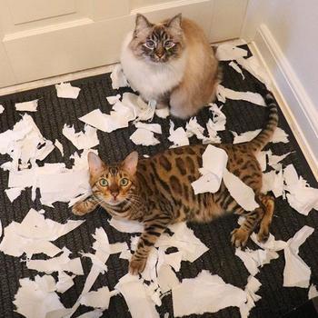 """Кошки — это уют в доме!"" - говорили они"