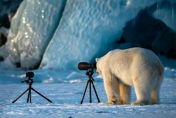 Уморительная фотоподборка с дикими животными, которые ведут себя как люди