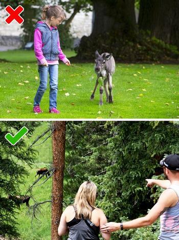 7 животных, при встрече с которыми мы ведем себя неправильно