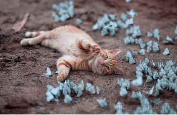 Разные животные с бабочками – фотографии, похожие на диснеевские сцены