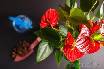10 комнатных растений, которые очистят воздух в помещении