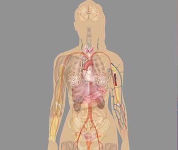 9 признаков перегрузки организма токсинами