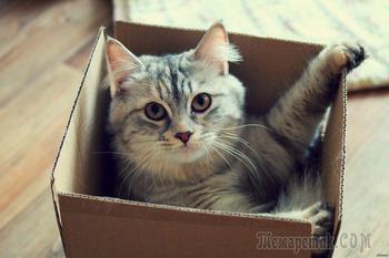 Картонная коробка или большое кошачье убежище