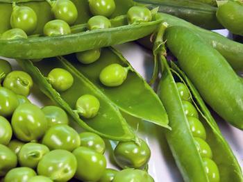 Вы сможете собрать хороший урожай гороха, если будете знать когда сажать его в открытый грунт