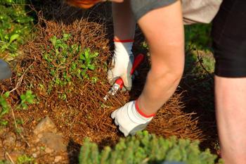 Почему сорняки нельзя оставлять на грядах на зиму