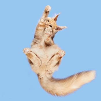 Фотопроект: как выглядит кот снизу