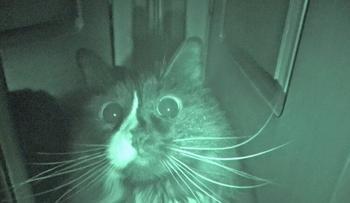Тыгыдык-тыгыдык: почему котики бегают по ночам?