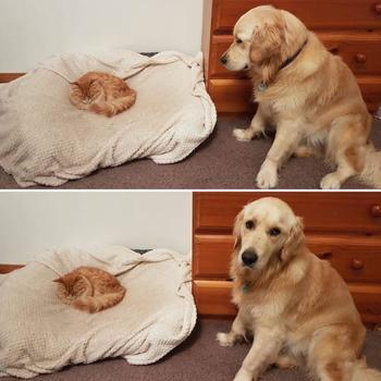 Дюжина собак, которые слишком воспитаны, чтобы отстаивать свои кроватки