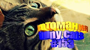 Смешные коты | Приколы с котами | Видео про котов | Котомания # 153