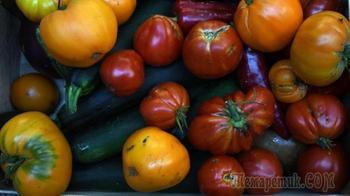 Вся правда о ГМО. Почему об этом умалчивают