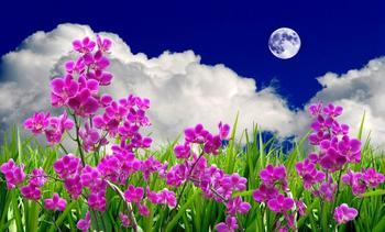 Лунный календарь цветовода 2017. Благоприятные дни для посадки и пересадки цветов в 2017 году