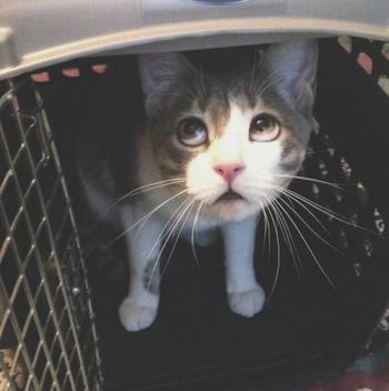 Драматичные фотографии о поездке домашних животных к ветеринару