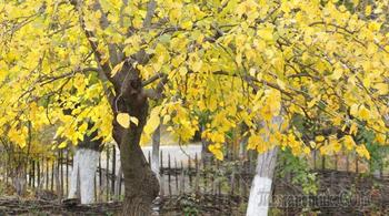 Осенняя подкормка сада