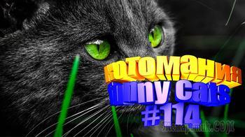 Смешные коты | Приколы с котами | Видео про котов | Котомания #114
