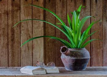 Панданус- тропическое растение