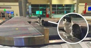 Приколы и курьёзы в аэропортах