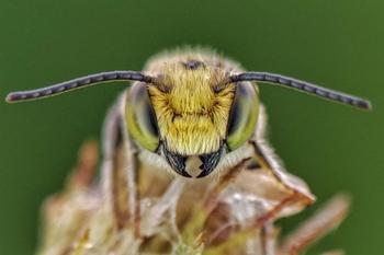 С такого близкого расстояния насекомых и других животных вы ещё не видели