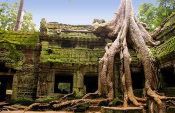 Деревья-завоеватели пространства