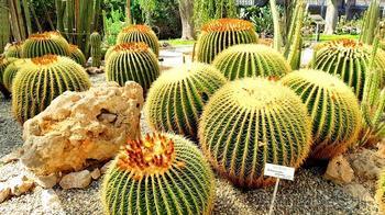 Сицилия 05. Ботанический сад в Катании