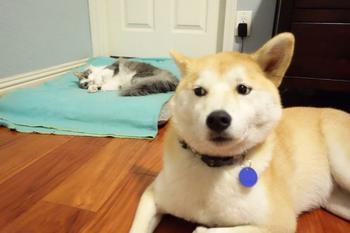 20 случаев, когда собаки оказались совершенно беззащитны перед котами
