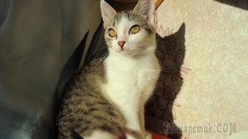 Клеопатра - котенок, с которым не будет скучно. Ищем дом.