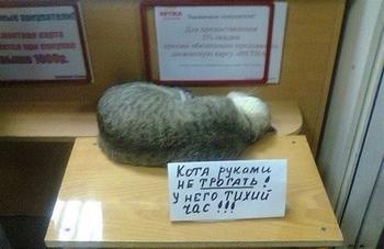 Не любить котов – нехорошо!