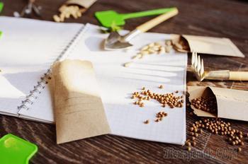 3 лучших способа стратификации семян