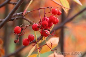 Осенний стриптиз (Надежда Стрелкова)