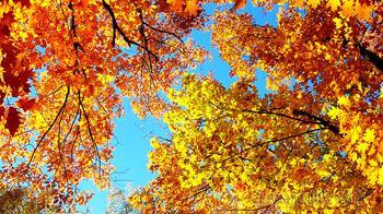 Осень. Настроение