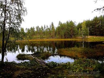 Лесное озеро. Карелия