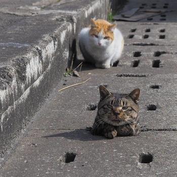 Развлечения бездомных котов Японии