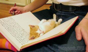 Коты, которые предпочитают необычные места обитания