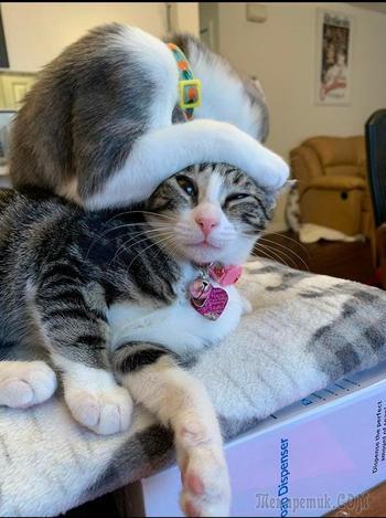 17 кошачьих пар, которые живут вместе и дарят своим хозяевам в два раза больше умиления и радости