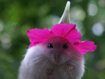 Фотографии животных в смешных позах