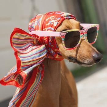 Знакомьтесь с Джоуи, собакой, которая является профессиональной моделью