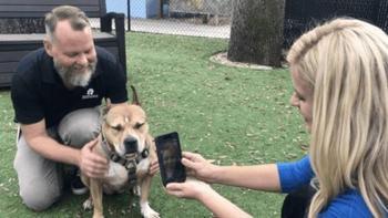 Банка пива помогла найти потерявшуюся собаку