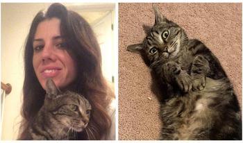 «Жди меня, и я вернусь»: пропавшая кошка встретилась со своей хозяйкой спустя 13 лет разлуки