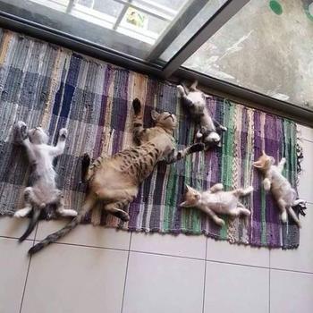 Кошки, которые обожают солнечный свет