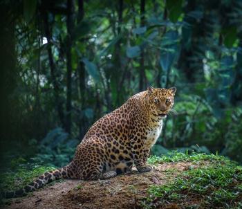 Фото будущих мам из мира животных. Очаровательные снимки